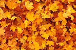 Nettoyage et ramassage des feuilles - Monmontcalm