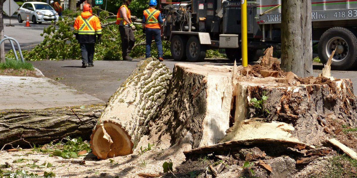 Protection des arbres et des milieux naturels à Québec : malgré un triste bilan, relevons-nous les manches! | 16 août 2021 | Article par Monquartier