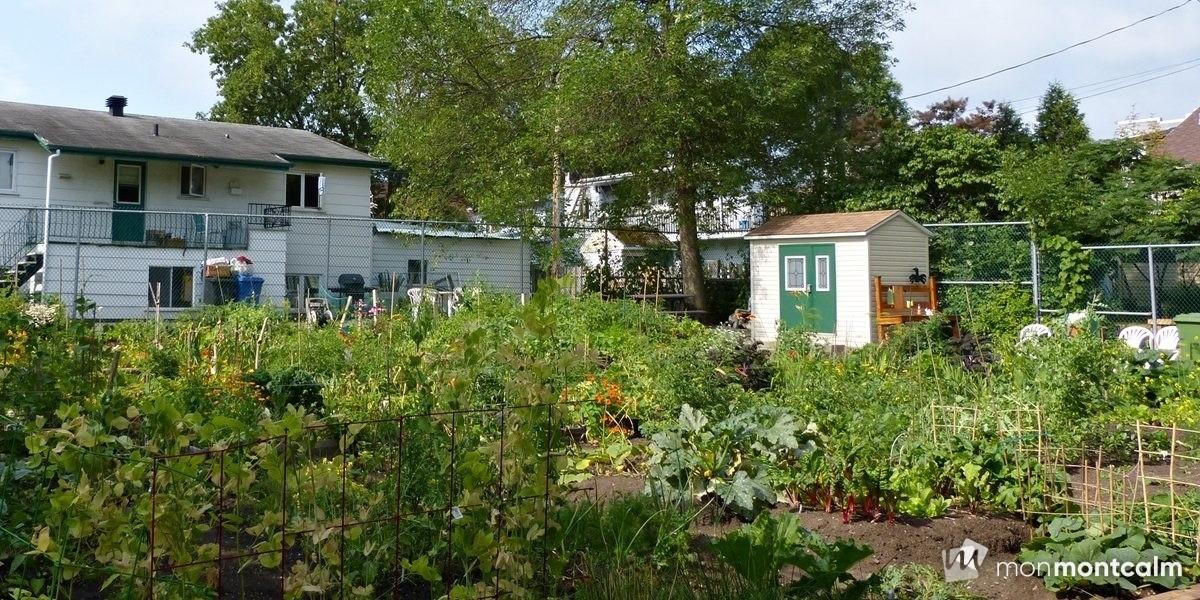 Agriculture urbaine : 44 nouveaux jardins communautaires et des mesures | 27 septembre 2017 | Article par Suzie Genest