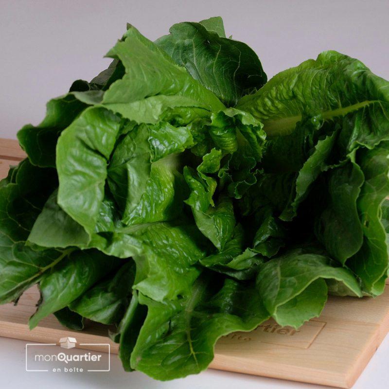 Salade romaine