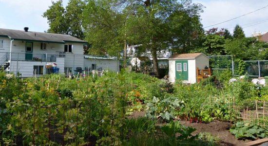 Quel nom pour le futur jardin communautaire ? - Céline Fabriès