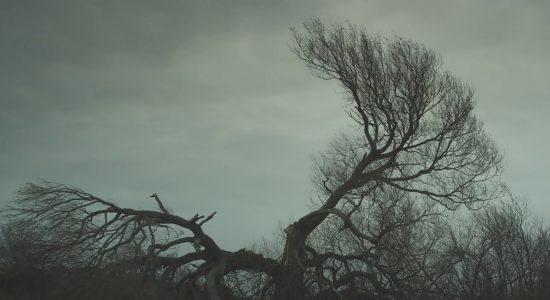 Immensités : Projection de <i>Stealing Alice</i> au MNBAQ - Marrie E. Bathory