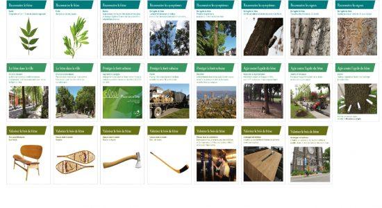 La forêt au cœur de la nouvelle Galerie urbaine de Montcalm - Tanya Beaumont