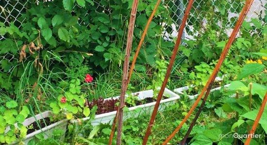 De simples plantations en pot peuvent venir en aide aux hirondelles et martinets.