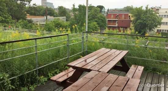 verdir les espaces urbains permet de nourrir les oiseaux en péril