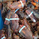 Le homard est arrivé! | Poissonnerie Poisson d'Or