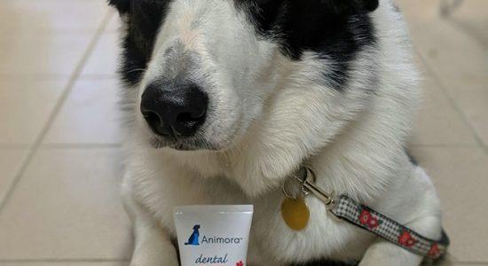 Gel dentaire Animora disponible en boutique   Animalerie Boutique Tropicale