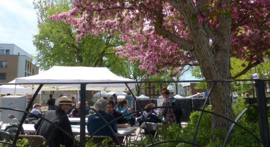 Un concours d'arbres remarquables dans Saint-Sauveur - Suzie Genest