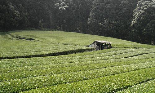 Atelier «Japon – Les thés verts, du Sencha au Matcha»