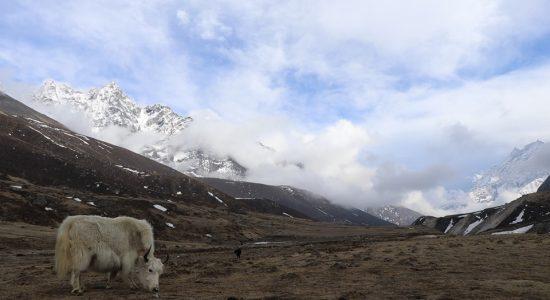 Grande Caravane Himalayenne 2020