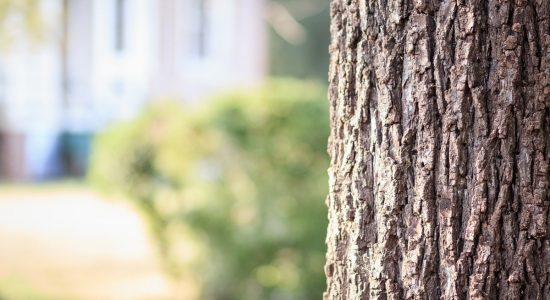 Plantation d'arbres dans Saint-Sauveur : terrains recherchés - Suzie Genest