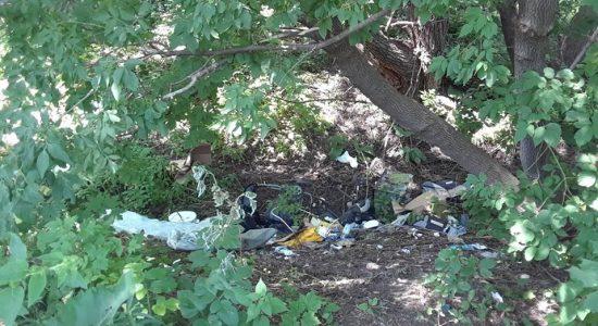 « Mon Limoilou Tout Propre » : des citoyens prennent les déchets en main - Suzie Genest