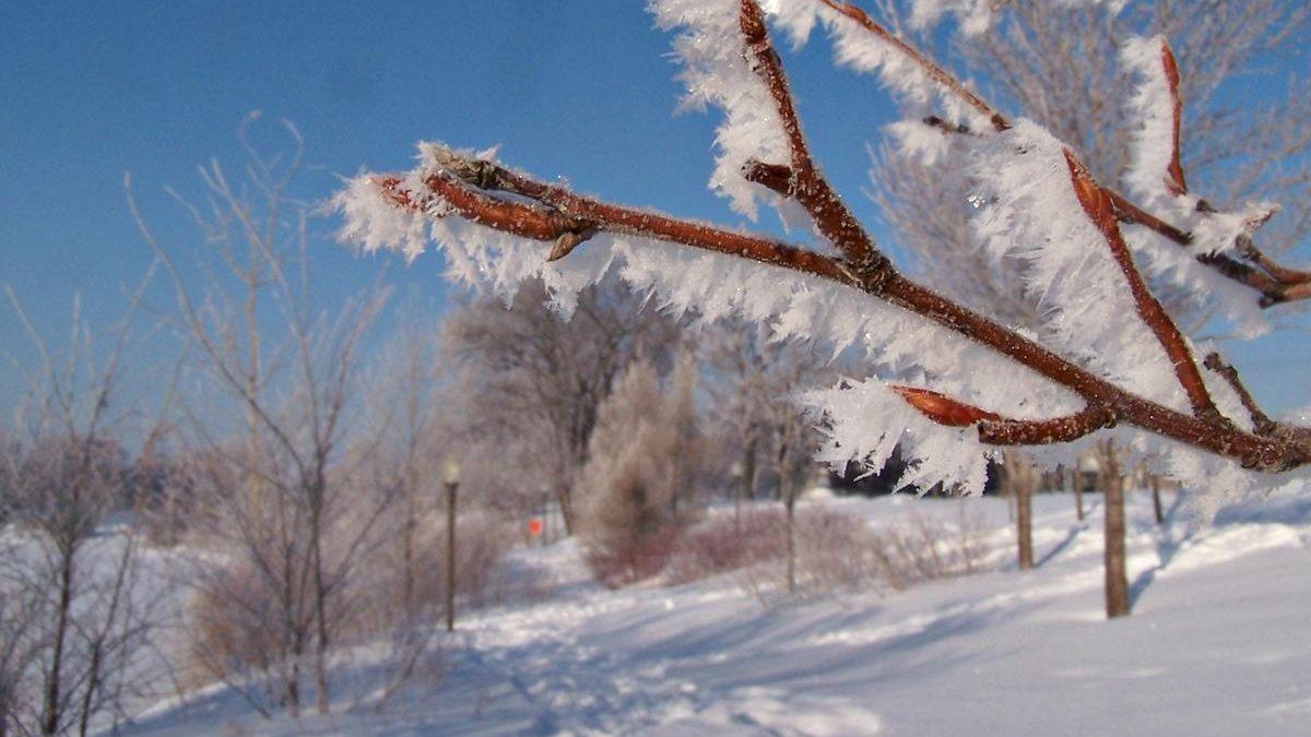 Miracles dans nos quartiers | 25 décembre 2019 | Article par Suzie Genest