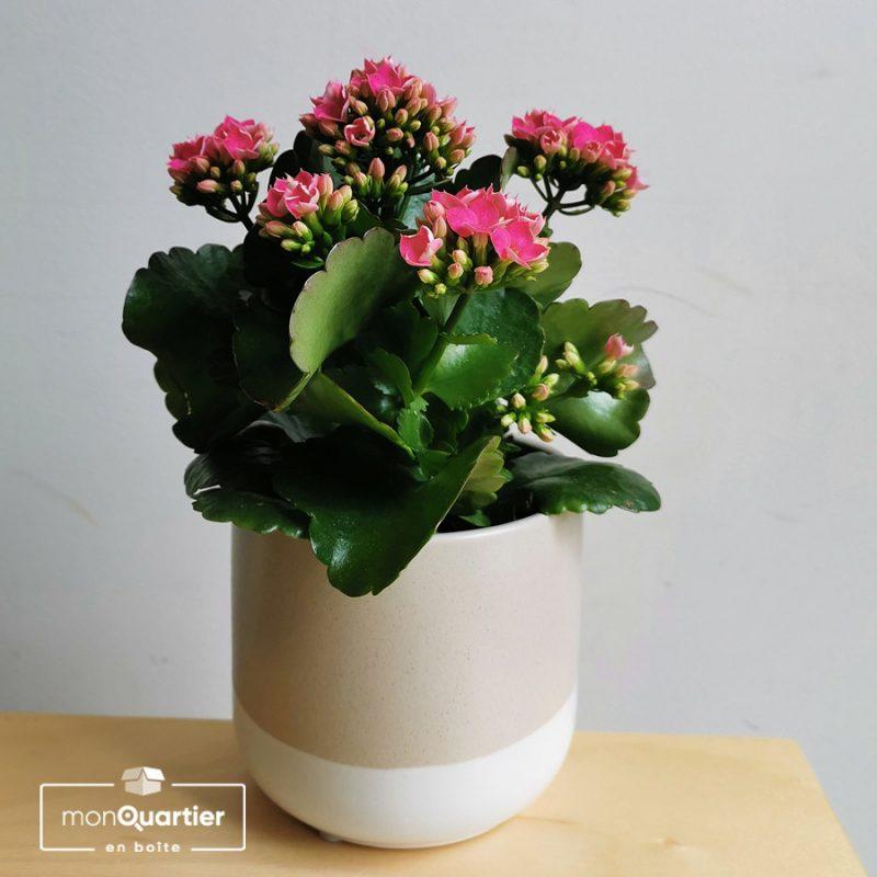 Kalanchoe fleuri avec cache-pot