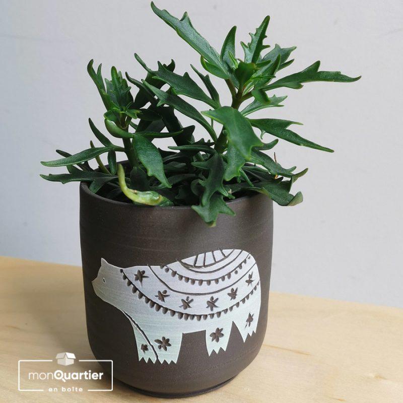 Plante grasse et cache-pot