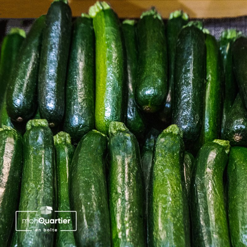 Courges zucchini