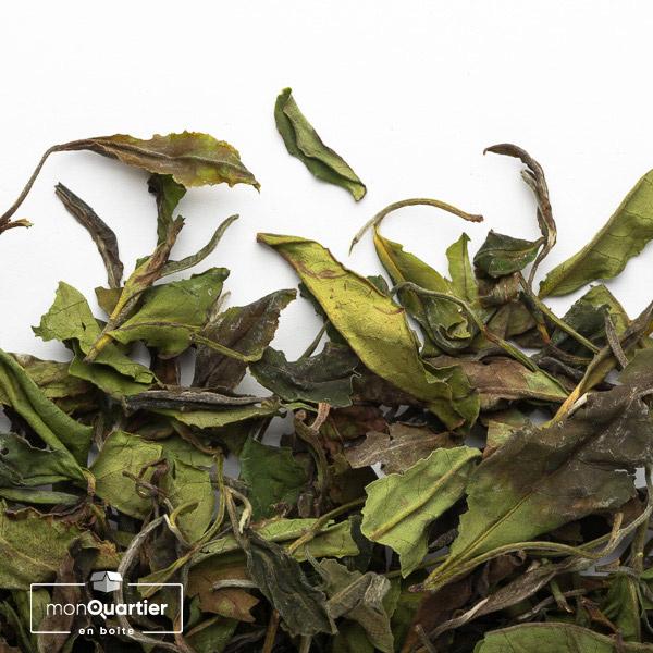 Tea Studio | Nilgiri Bai Mu Dan