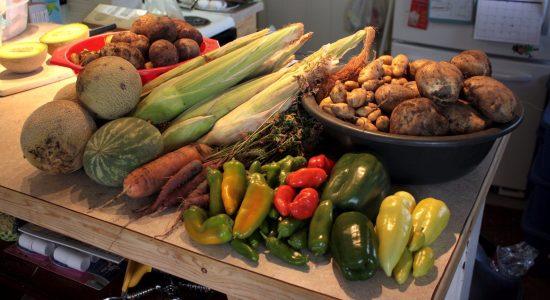 Un marché solidaire à St-Roch cet été! - Amélie Légaré