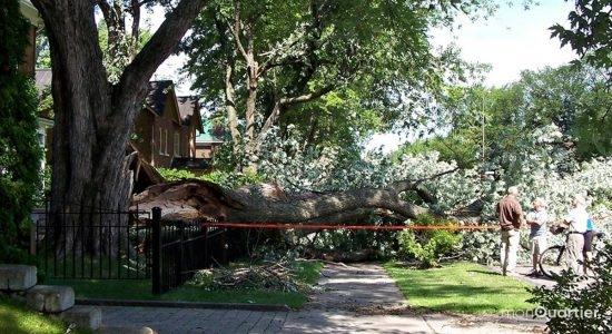 Montcalm. Les dégâts de l'orage de la veille sur l'avenue des Érables. 2 août 2006.