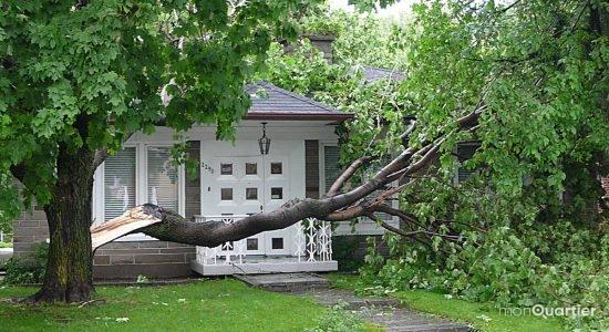 Limoilou. Les dégâts de l'orage du 10 juin 2008.
