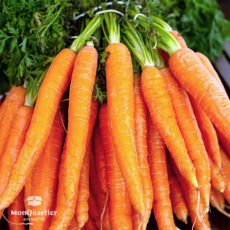 carotte-nantaise